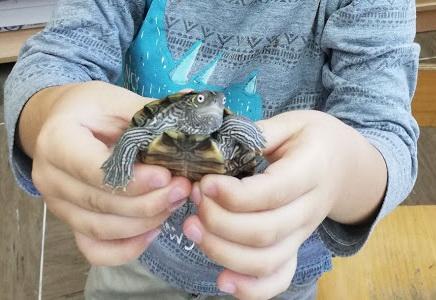 Želvica na obisku v 1. razredu